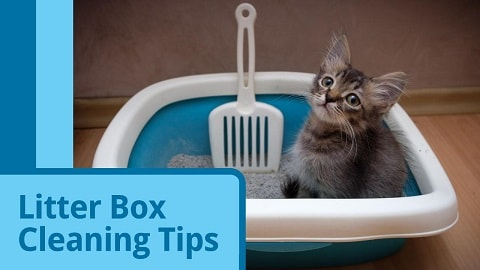 How to Clean a Litter Box?