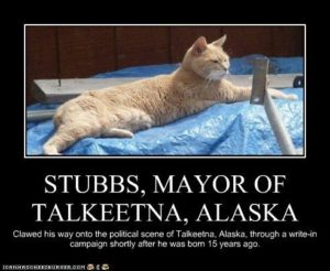 Some cat also got a chance to be a Mayor