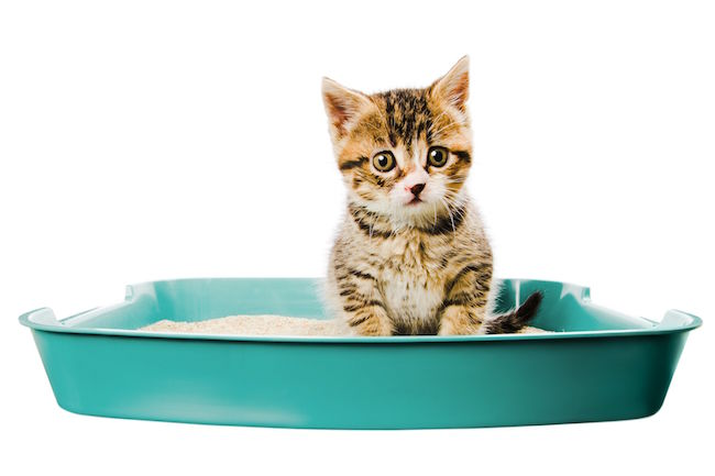 kittens start using the litter box guide