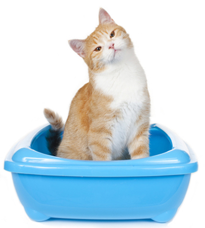 cat not using litter box
