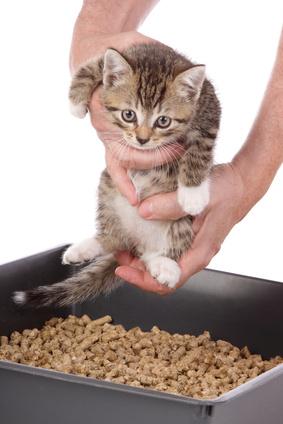 how to litter train a kitten
