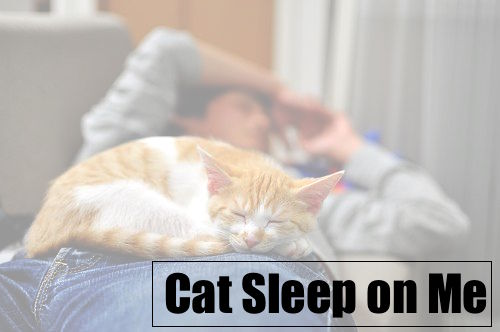 Why does my Cat Sleep on Me – Cat Facts