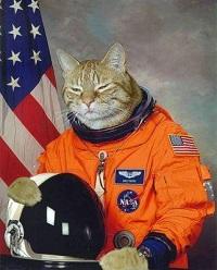 Cat became an Astronaut