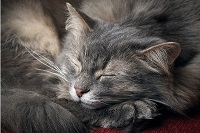 sleeping ability
